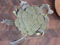 冷凍ブロッコリーを使ったおすすめレシピをご紹介!上手な解凍方法や離乳食も