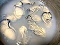 冷凍した牡蠣の美味しい食べ方まとめ!解凍方法や保存期間もご紹介