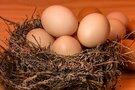 お取り寄せ高級卵が大人気!おすすめ商品をランキング形式でご紹介