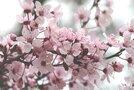 歴史と花の名所・佐倉城址公園を徹底ガイド!四季折々の自然に触れよう