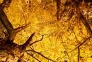 イチョウ並木が美しい光が丘公園を大特集!見どころやアクセス方法は?