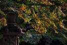 都会のオアシス・有栖川公園を大特集!パワースポットと称される癒しの場所とは