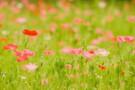 神奈川屈指の都市公園・くりはま花の国をご紹介!四季を彩る花々を観よう