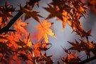 国営武蔵丘陵森林公園はライトアップイベントが人気!花の見頃やアクセス方法は?