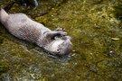 智光山公園はこども動物園があるおすすめレジャースポット!人気の遊具は?