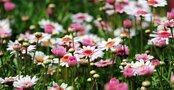 大阪・靭公園はテニス好きにおすすめのスポット!季節の花が楽しめる人気の場所も