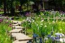 上尾丸山公園は四季折々の植物を楽しめる癒しスポット!見頃やおすすめの花は?