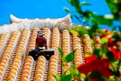 沖縄の離島「竹富島」の魅力を総まとめ!人気スポットやアクティビティも紹介