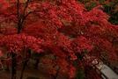 弥彦公園は紅葉が美しい新潟の観光スポット!おすすめのランチやアクセスは?