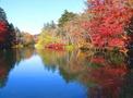 雲場池は軽井沢自慢の自然溢れる人気スポット!周辺の観光名所も徹底調査