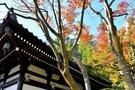 長谷寺は鎌倉観光の定番スポット!見どころやアクセスを徹底調査