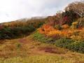 栂池自然園で長野の大自然を満喫!アクセスや季節ごとのおすすめの服装は?