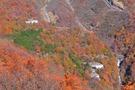 いろは坂は日本屈指の紅葉の名所!絶対に見逃せない撮影スポットは?