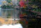 日光・湯ノ湖は釣りが楽しめる観光スポット!紅葉が美しいハイキングコースとは?