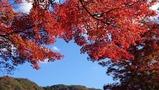 久安寺は季節の花々が美しい大阪の人気スポット!紅葉の見頃やアクセスを徹底調査