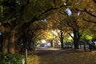 明治神宮外苑はいちょう並木が美しい人気スポット!アクセスや設備を徹底調査