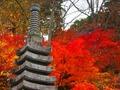 永源寺は茨城が誇る紅葉が美しい人気スポット!アクセスや混雑しにくい日は?