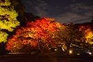 六義園は東京屈指の紅葉の名所!見頃や口コミの評判を徹底調査