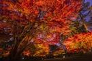 大田黒公園は桜と紅葉が美しいおすすめレジャースポット!アクセスや見どころは?