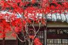 平林寺は埼玉・新座の紅葉が美しい人気観光スポット!見どころやアクセスは?