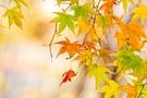 延命寺は河内長野の紅葉狩りが人気のおすすめスポット!見頃やアクセスは?