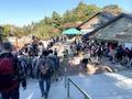 高尾山の混雑しやすい季節を徹底調査!お盆や正月は混むのが普通?