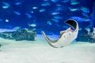 池袋サンシャインの水族館を徹底解説!見どころやチケット情報もまとめてご紹介