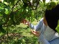 福島県玉川村は自然豊かな癒やしの村!おすすめの特産品やお出かけスポットをご紹介