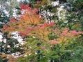 大阪・勝尾寺は紅葉が美しい人気の名所!見頃や混雑状況を徹底調査
