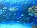【2021年最新】実は貴重なラッコを見られる水族館はココ!日本には4頭しかいないってホント?